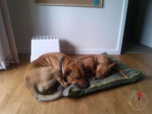 adottare-pets-perth