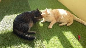 trasferiamo-lisbona-gatti