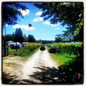 camping girasoli