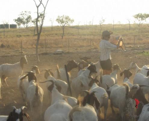 Farm-work-88-giorni
