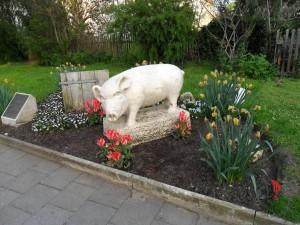Foto del maialino simbolo di Nördlingen
