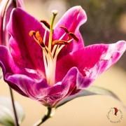 fiore; femminilità; vita