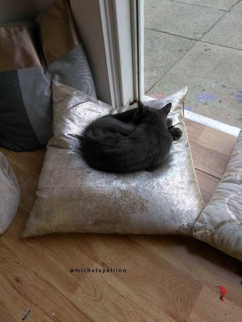 gatto-acciambellato-charleston