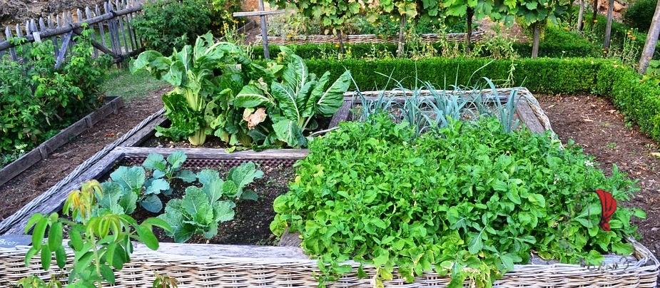 orto-coltivato-serra