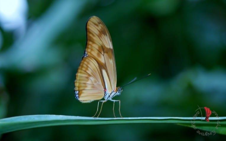 farfalla-trasformazione