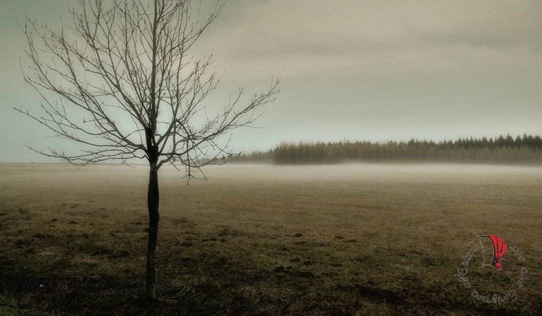 pianura-albero-nebbia