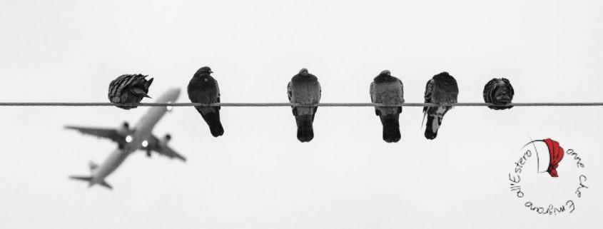 piccioni-aereo