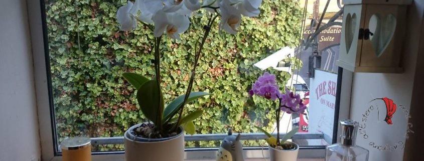 piante-finestra-luce