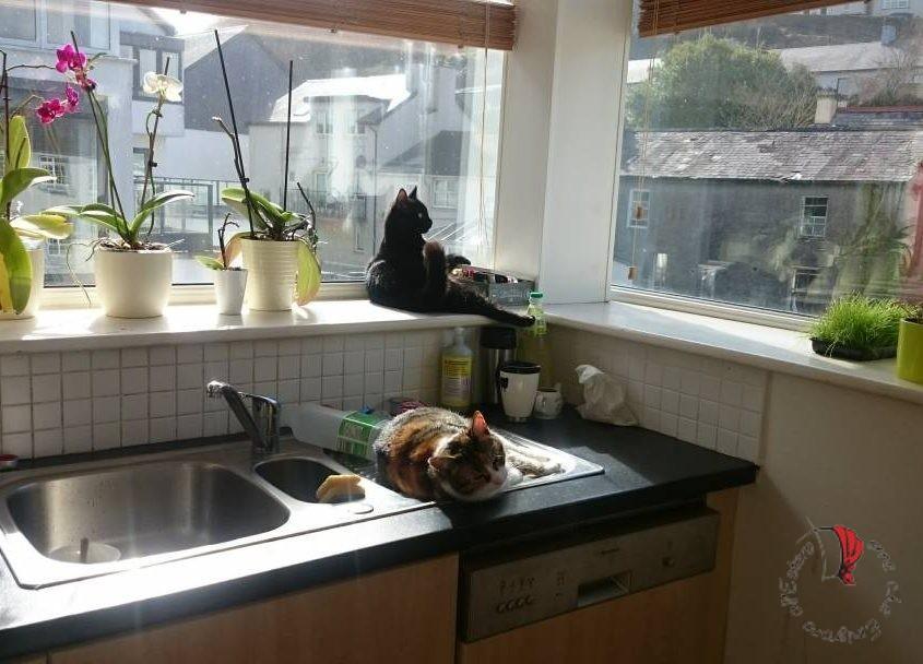 cucina-luce-finestre