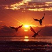 Alba e uccelli in volo