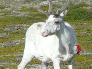 antonella renna bianca