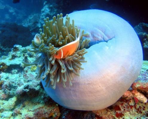 lezione-biologia-seychelles