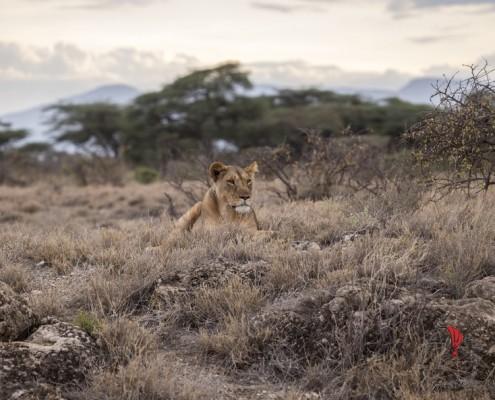 savana-ricordi-bambino-masai