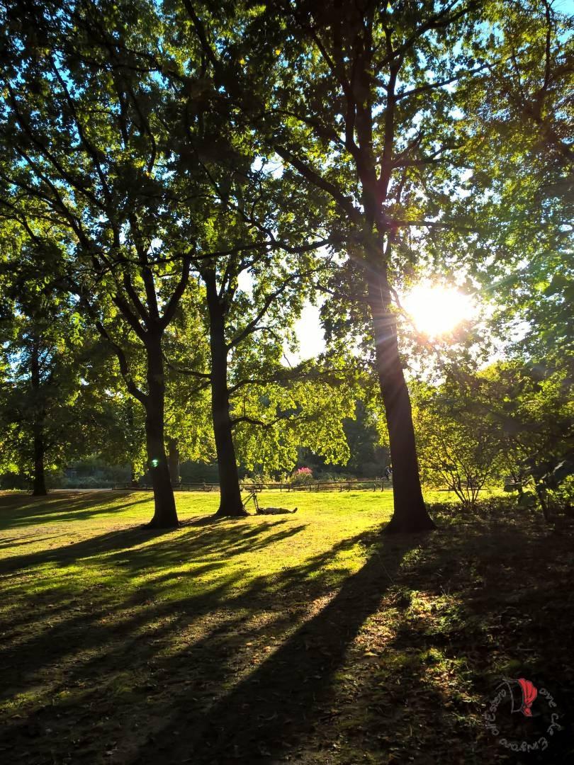 luce-parco-berlino