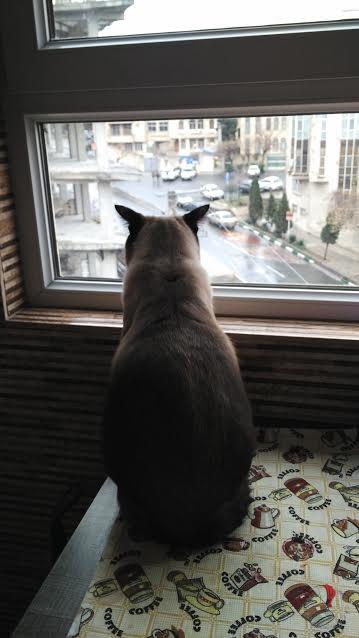iran-gatto