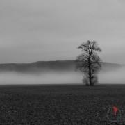 sguardo-nebbia