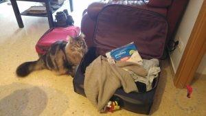 gatto-valigia