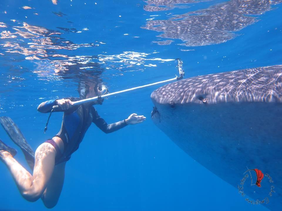 squalo-balena-madagascar