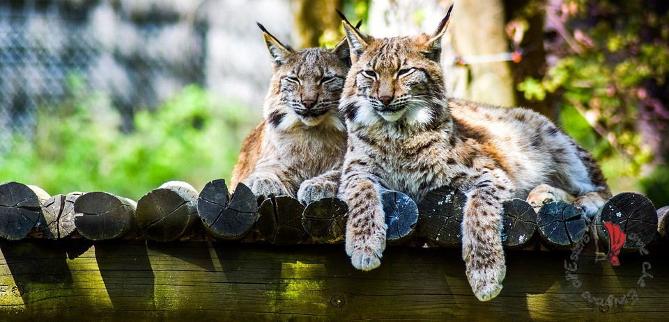 vacanze-germania-zoo