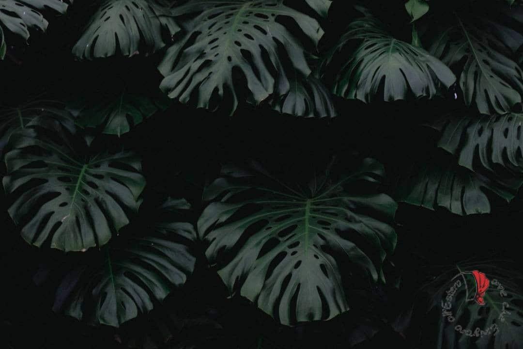 seychelles-sanita