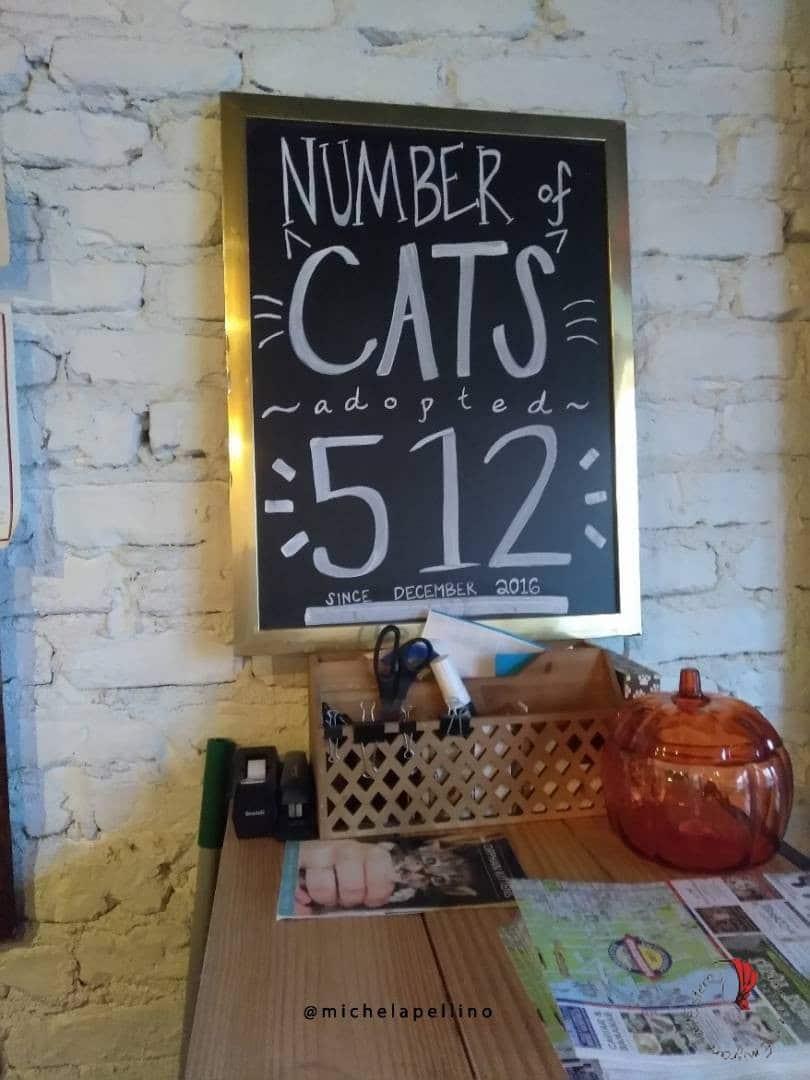 gatti-bar-america