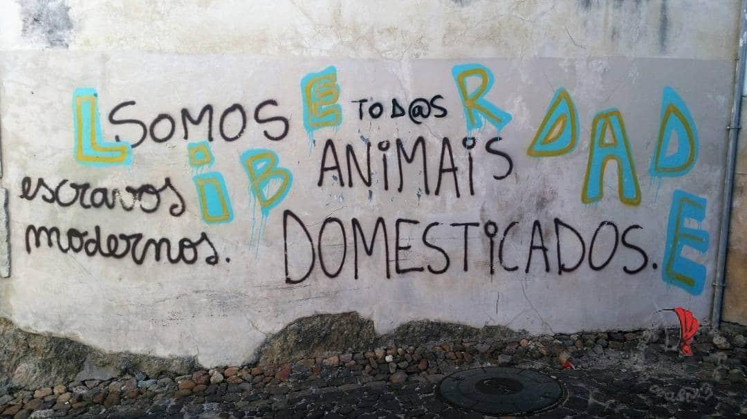 ANIMALI-ADDOMESTICATI-COIMBRA