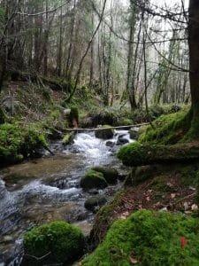bosco-irlandese
