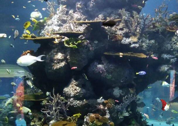 acquario-singapore
