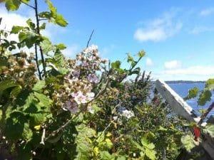 Cile-fiori-panorama