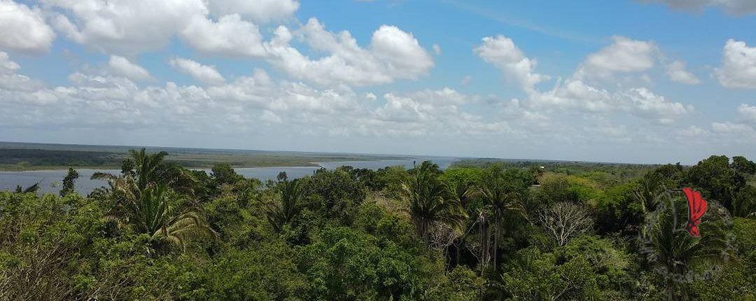 Foresta pluviale Lamanai