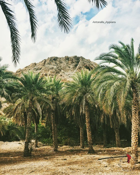 Oman-paesaggio-palme