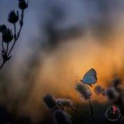 farfalla-volare