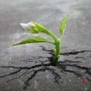 ricominciare-cambiamento-nuovo lavoro-nuova routine
