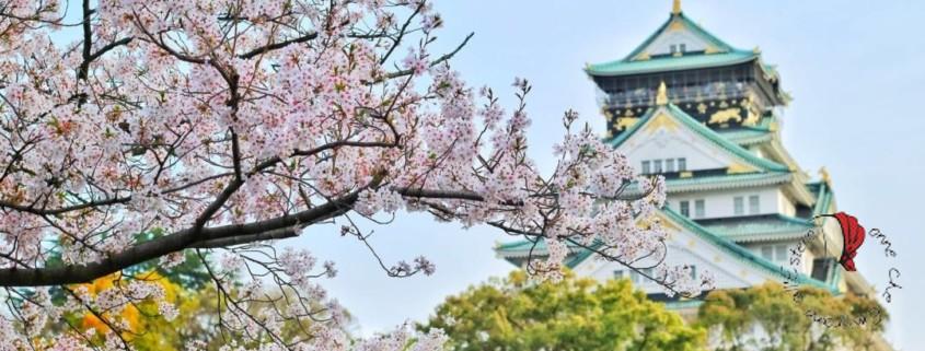 giappone-tempio-albero