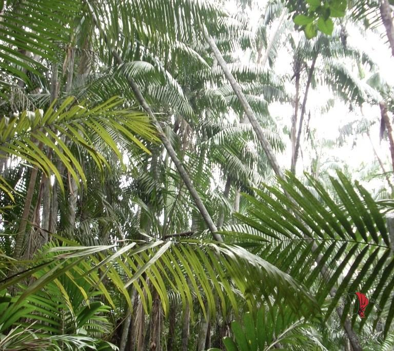 Verde-vita-foresta