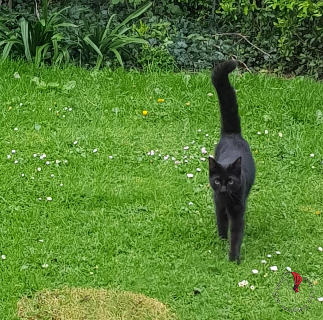gatto-giardino