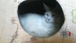 Gatto-nascosto