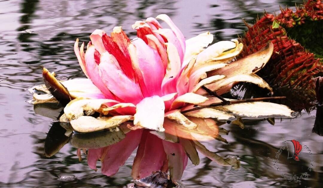 fiore-su-lago