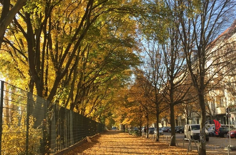 alberi-viale