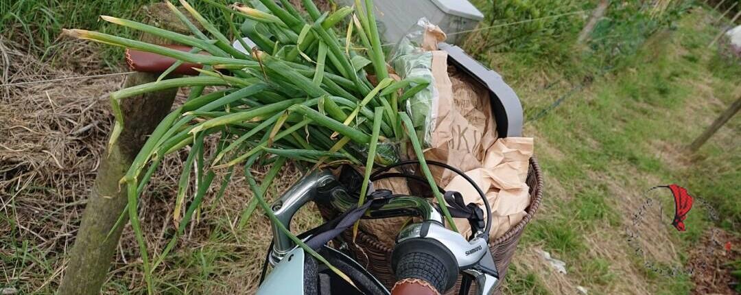 verdura-cestino-bici