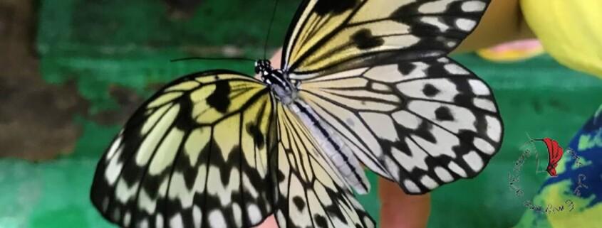 farfalla sentosa singapore