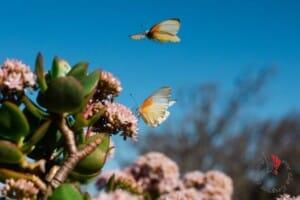 farfalle-che-volano