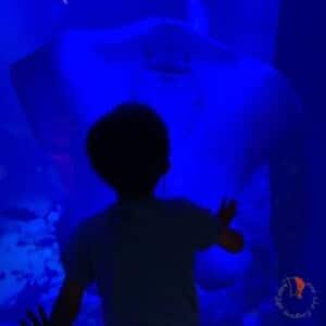 singapore-acquario-sentosa
