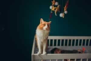 culla-gatto-licenziata