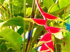 fiori-tropicali