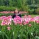 ginevra-tulipani