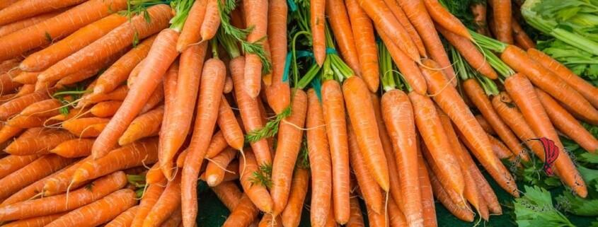 carote-olanda