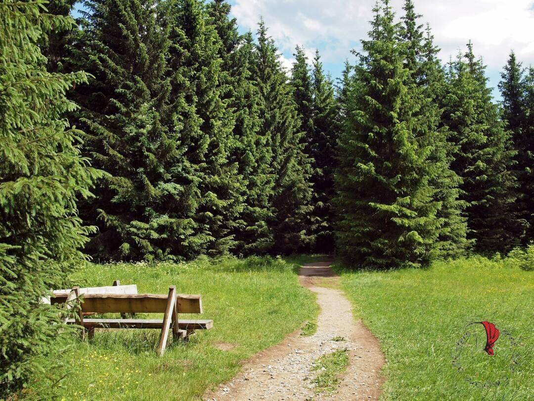 parco nazionale dello Harz