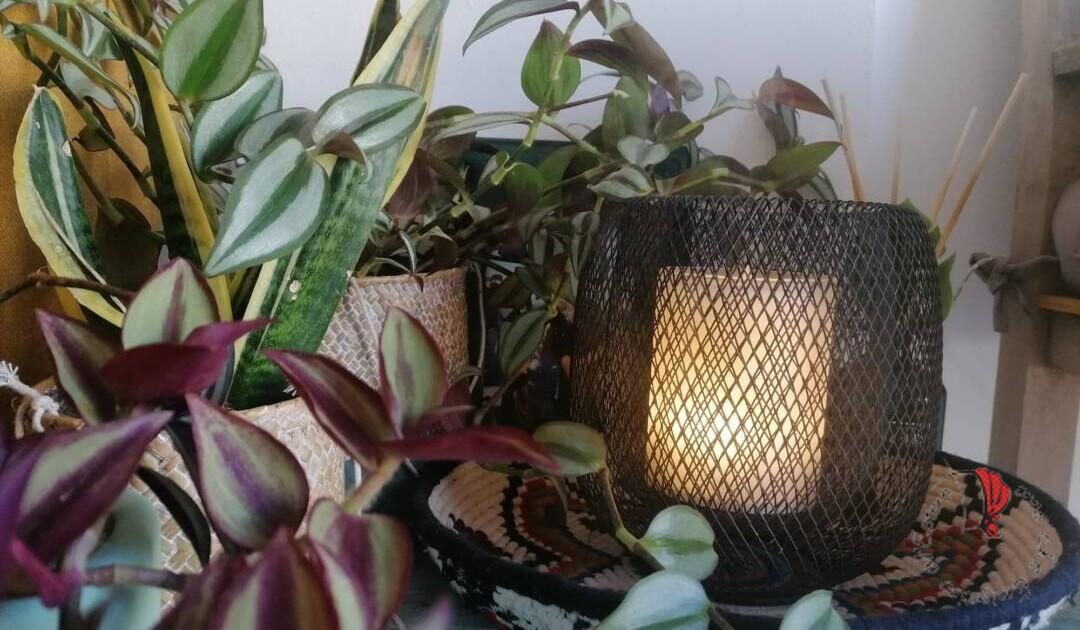 lampada-sprigiona-essenza