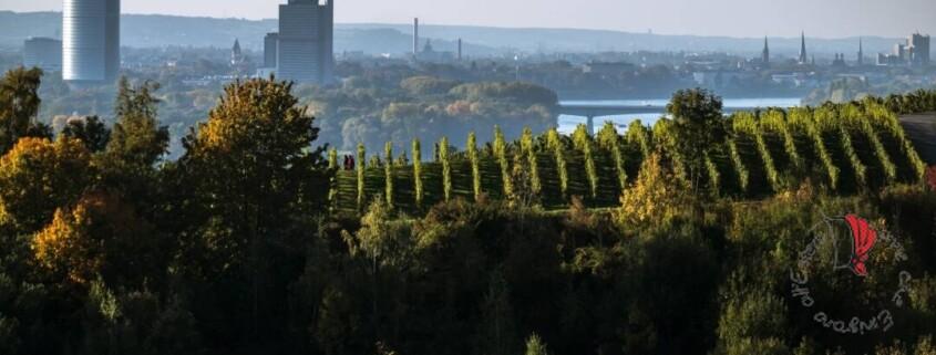 bonn-skyline
